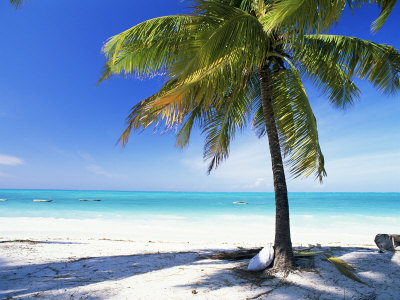 2938913-palm-tree-white-sandy-beach-and-indian-ocean-jambiani-island-of-zanzibar-tanzania-east-africa